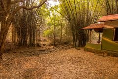 Bamboo trees nature at its best royalty free stock image