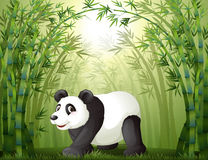 Bamboo trees with a panda at the center Royalty Free Stock Photo