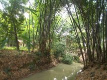 Bamboo trees and the small river on the village stock photos