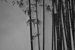 Bamboo trees beside the wall Royalty Free Stock Image