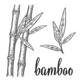 Bamboo trees white silhouettes and black outline on red circle. Hand drawn design element. Vintage vector engraving Stock Image