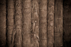 Bamboo Tropical Background Stock Photos