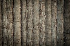 Bamboo Tropical Background Royalty Free Stock Photos