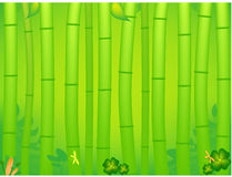 Bamboo tropical forest stock photography