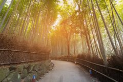 Bamboo tropical forest with walk way Stock Photography