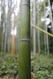 Bamboo trunk Stock Photos