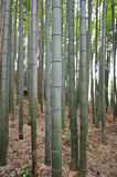 Bamboo trunk Royalty Free Stock Images
