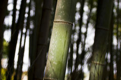 Bamboo trunk Stock Photo