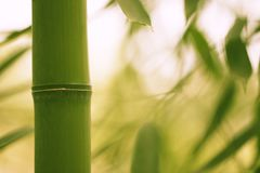 Bamboo park, close-up. Bamboo trunk and leaves close-up on a blurred background Stock Images
