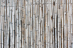 Bamboo Trunk Surface and Texture Royalty Free Stock Images