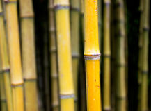 The bamboo trunks in a forest Stock Photo