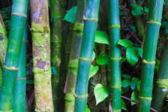 Bamboo trunks Stock Photo