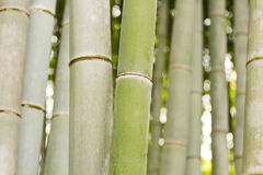 Bamboo trunks Royalty Free Stock Image