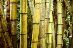 Bamboo trunks Royalty Free Stock Photo