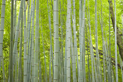 Bamboo trunks Royalty Free Stock Photography
