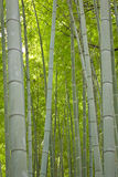Bamboo trunks Royalty Free Stock Photos