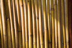 Bamboo trunks shined with the sun Royalty Free Stock Photography
