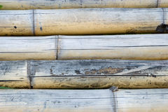 Bamboo trunks Royalty Free Stock Images