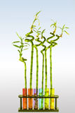 Bamboo in tube. Bambo in test tube on grey blue background Stock Photography