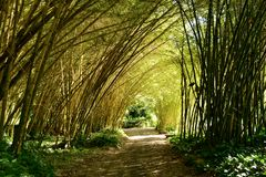 Bamboo Tunnel Stock Images