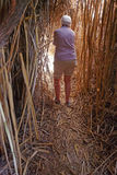 Bamboo Tunnel Royalty Free Stock Images