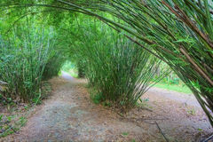 Bamboo tunnel Stock Image