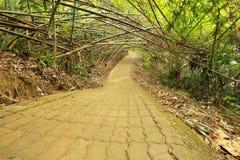 Bamboo tunnel Stock Photos