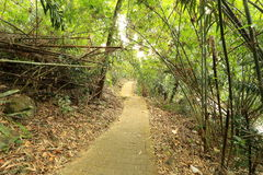 Bamboo tunnel Royalty Free Stock Photo