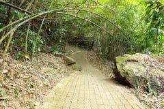 Bamboo tunnel Stock Photo