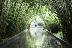 A Bamboo Tunnel in a Park. stock photo