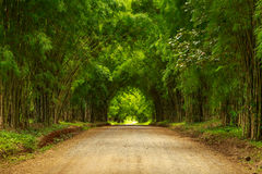 Bamboo tunnel scenery background Stock Photo