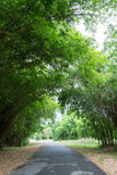 Bamboo tunnel at Waeruwan Garden,Phutthamonthon,Nakhon Pathom Province,Thailand. The bamboos from every regions of Thailand are planted at Waeruwan Garden in Royalty Free Stock Photos
