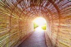 Bamboo tunnel walk way. Bamboo tunnel walk way in public garden with sunset lighting Royalty Free Stock Images