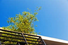 Bamboo under blue clear sky Royalty Free Stock Images