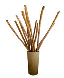 Bamboo in an urn isolated on white background Stock Photos