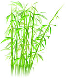 Bamboo vector Royalty Free Stock Image