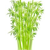 Bamboo. vector Royalty Free Stock Images