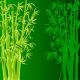 Bamboo. vector. Vector illustration of bamboo on green background Stock Image