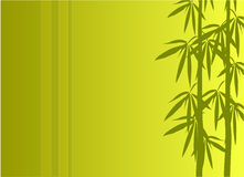 Bamboo vector illustration Royalty Free Stock Photography