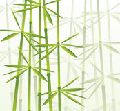 Bamboo, vector illustration. Editable vector illustration of a tropical bamboo forest with foggy background Royalty Free Stock Photography