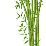 Bamboo vector illustration Royalty Free Stock Photo