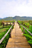 Bamboo walk way Stock Images