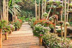 Bamboo walkway Stock Photography