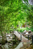 Bamboo walkway in the forest Stock Image