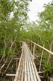 Bamboo walkway in Mangrove forest Stock Photos