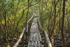 Bamboo walkway in mangrove forest. Selective Focus. Stock Photography