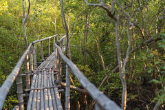 Bamboo walkway in mangrove forest. Selective Focus. Royalty Free Stock Image