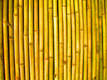 Bamboo wall. Texture background of a bamboo wall Stock Photos