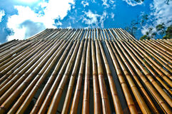 Bamboo Wall. Looking up to the sky Royalty Free Stock Images