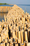 Bamboo wall. In mangrove education center at Samut Sakhon, Thailand Stock Photos
